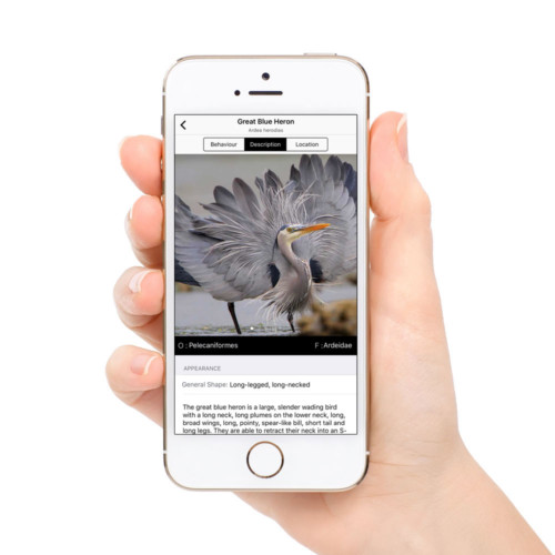block_phone_square_heron