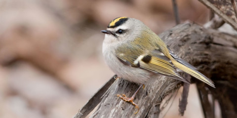 Birds of Vancouver Island, BC